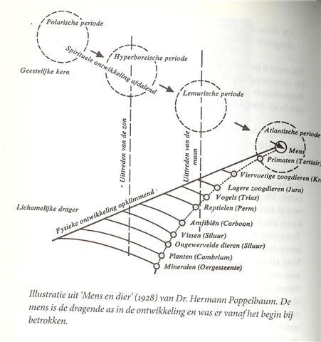 evolutiemodel